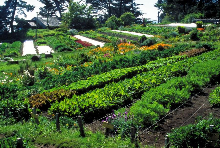 Увеличение урожайности
