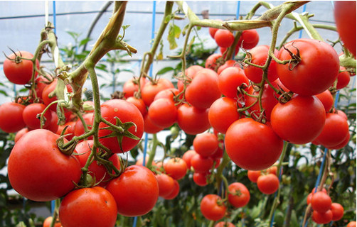 Биопрепарат для увеличения урожайности