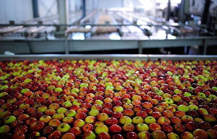 Разложение отходов при переработке фруктов и овощей